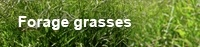 ForageGrasses.jpg
